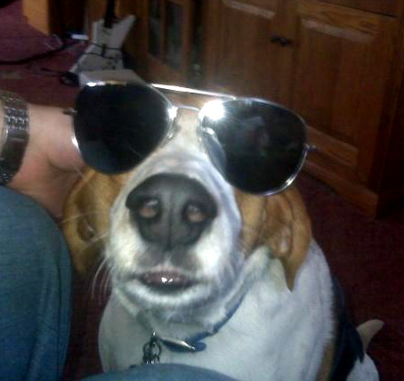 Dog looking too cool in sunglasses